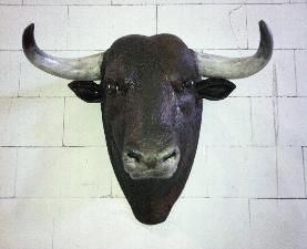 animales-toro-3
